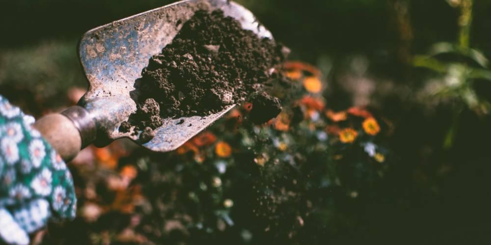 5 Fantastic Health Benefits of Growing your own Vegetable Garden
