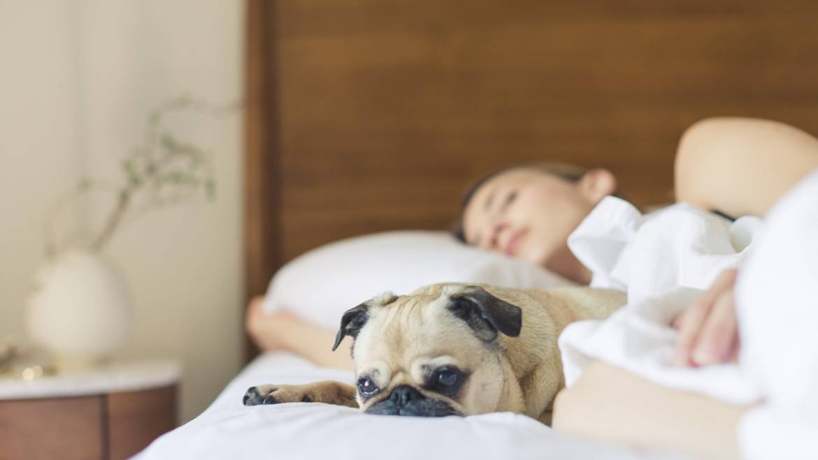 5 Simple Strategies for Enjoying the Best Sleep of Your Life